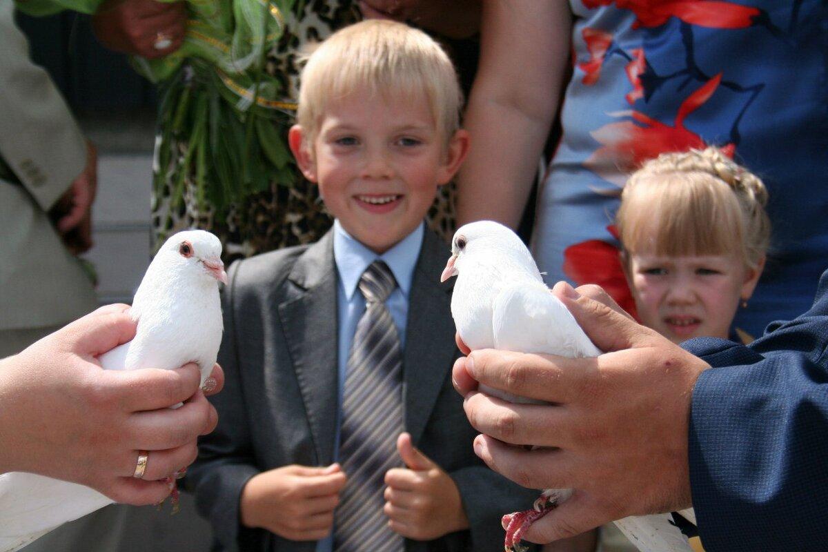 Свадебные голуби - Владимир Помазан