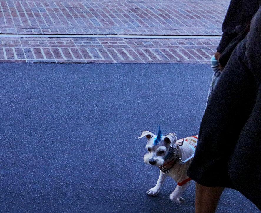 ...и маленькая собачонка - Valera Kozlov