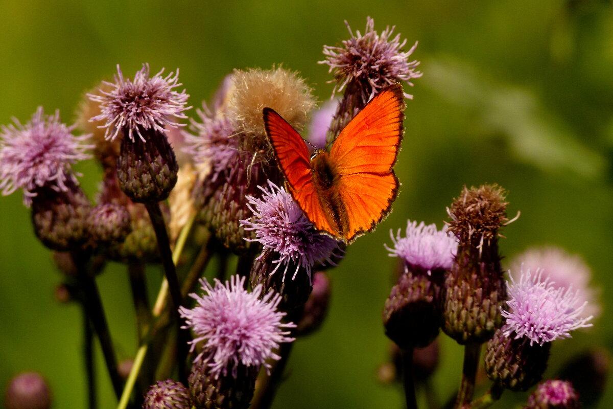 ну вот и бабочки...14 - Александр Прокудин
