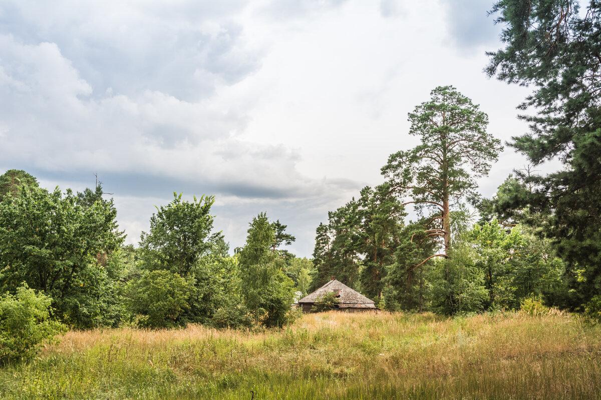 в лесу - Ирина Фёдорова