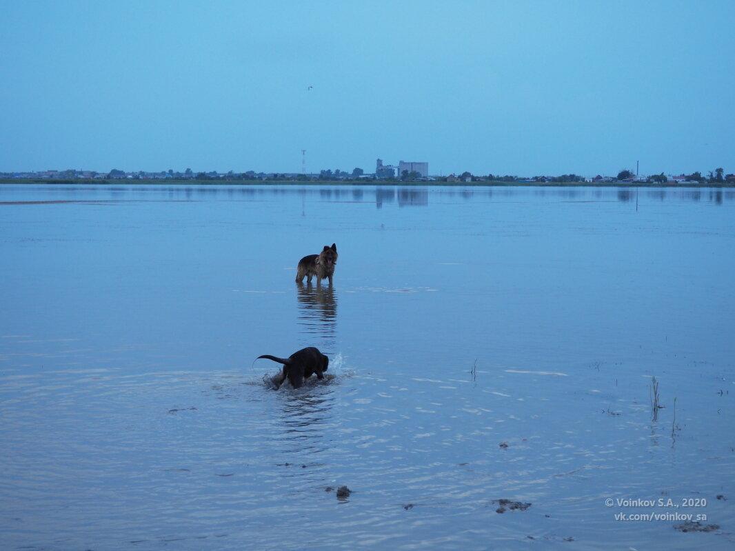 Бывалый пёс учит мелкую правильно мыть лапы - Сергей Воинков