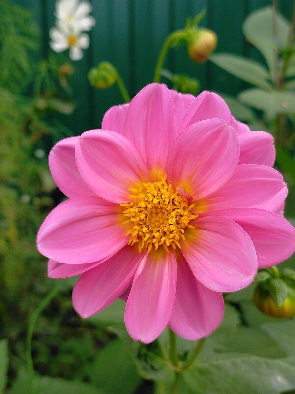 Осенний цветок - Yulia Raspopova