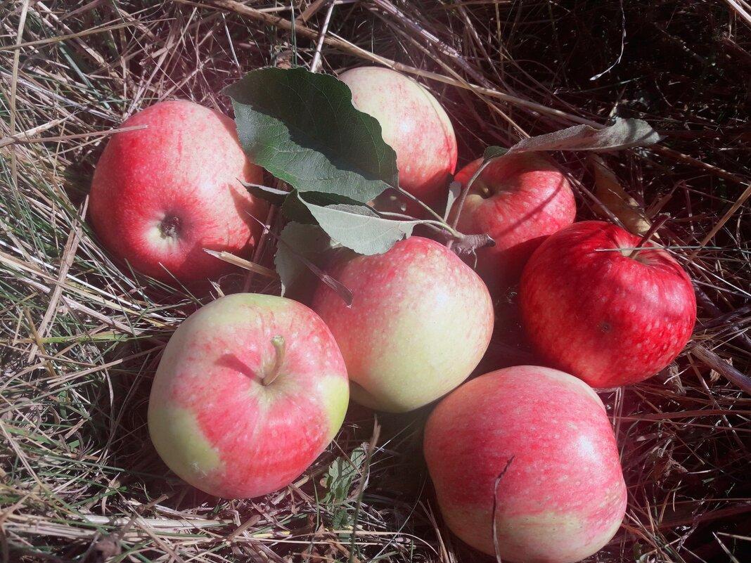 Яблочки. - Yulia Raspopova