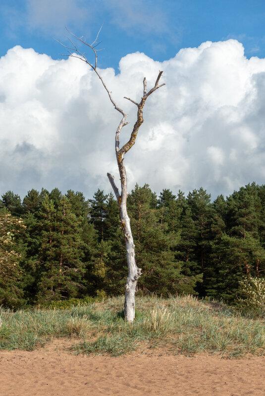 Дерево - Владимир Засимов