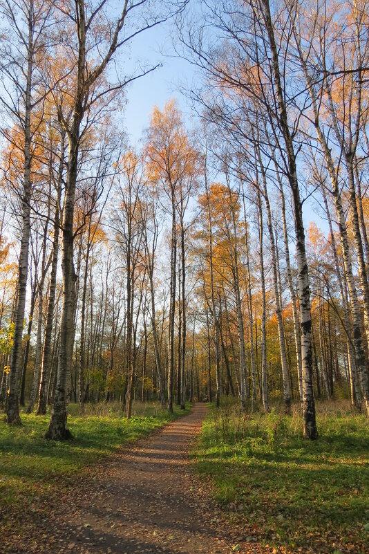 Последние осенние деньки - Вера Щукина
