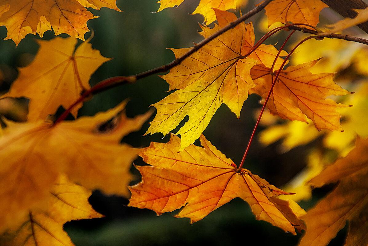 Осень золотая - Владимир Кроливец