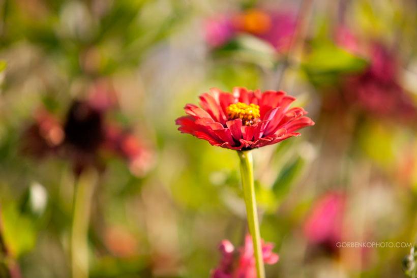 Цветок - Сергей Горбенко