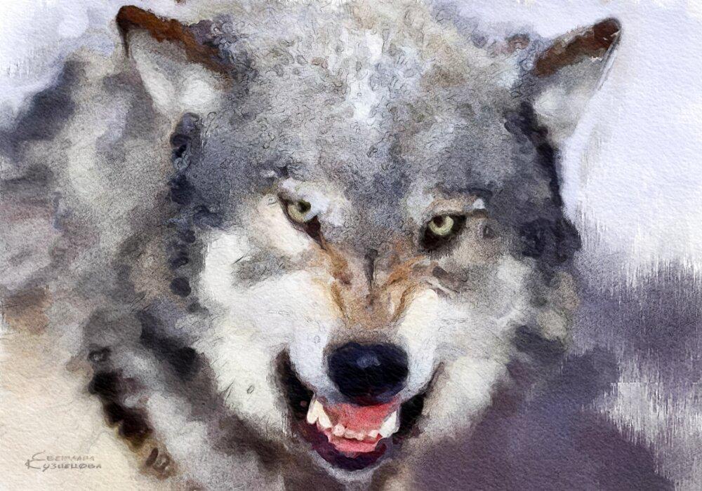 Волк - Светлана Кузнецова