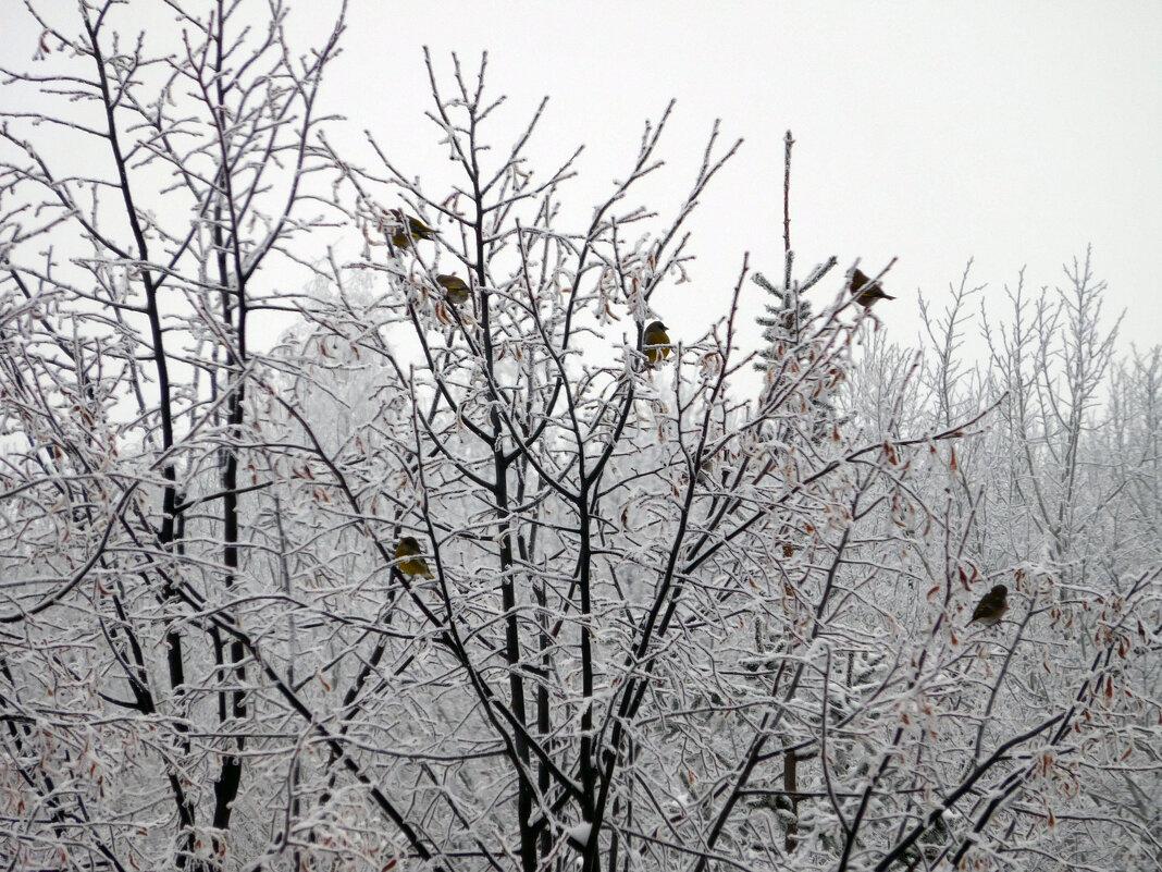 Птички на ветках - Оливер Куин