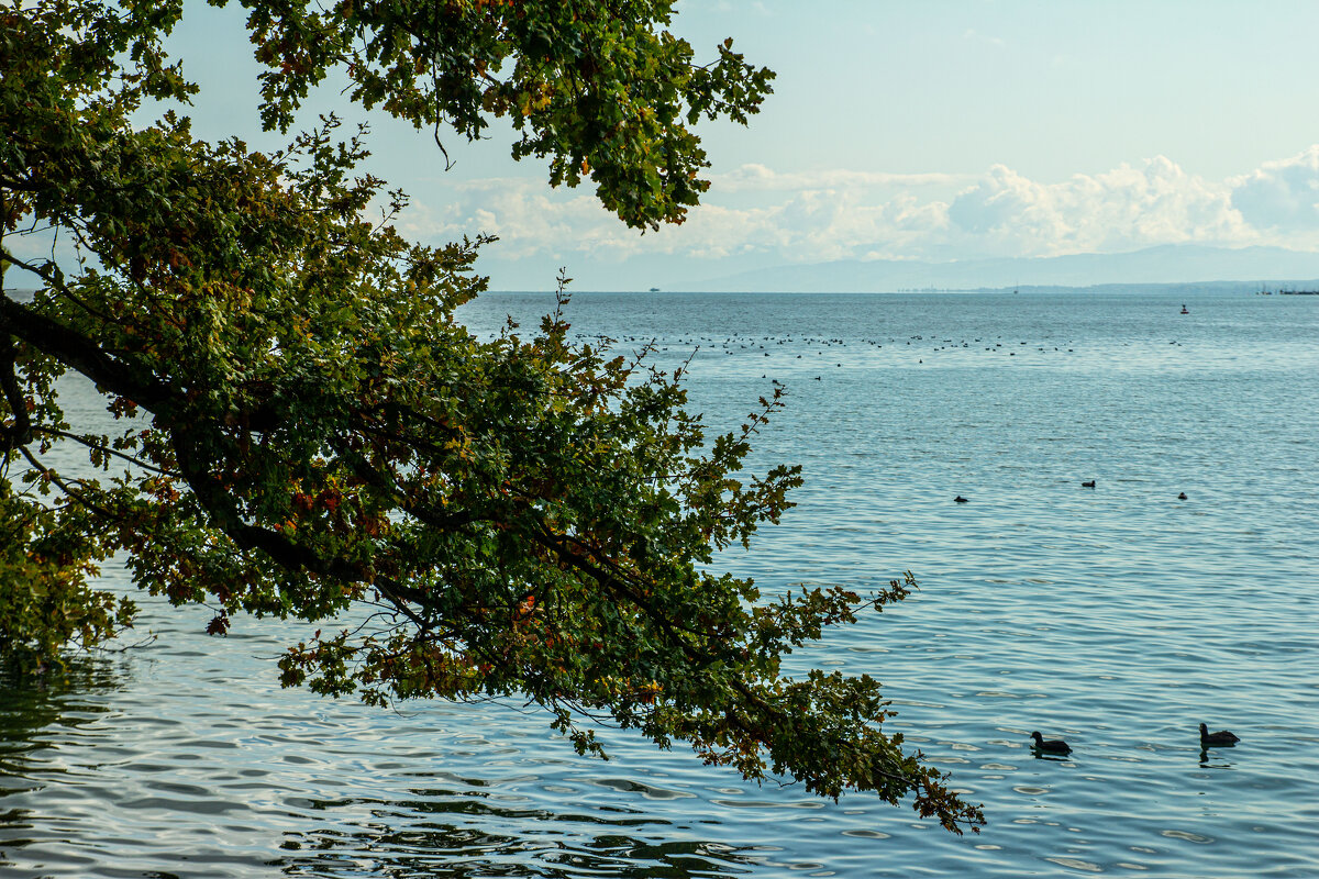 Баденское озеро. - Lucy Schneider