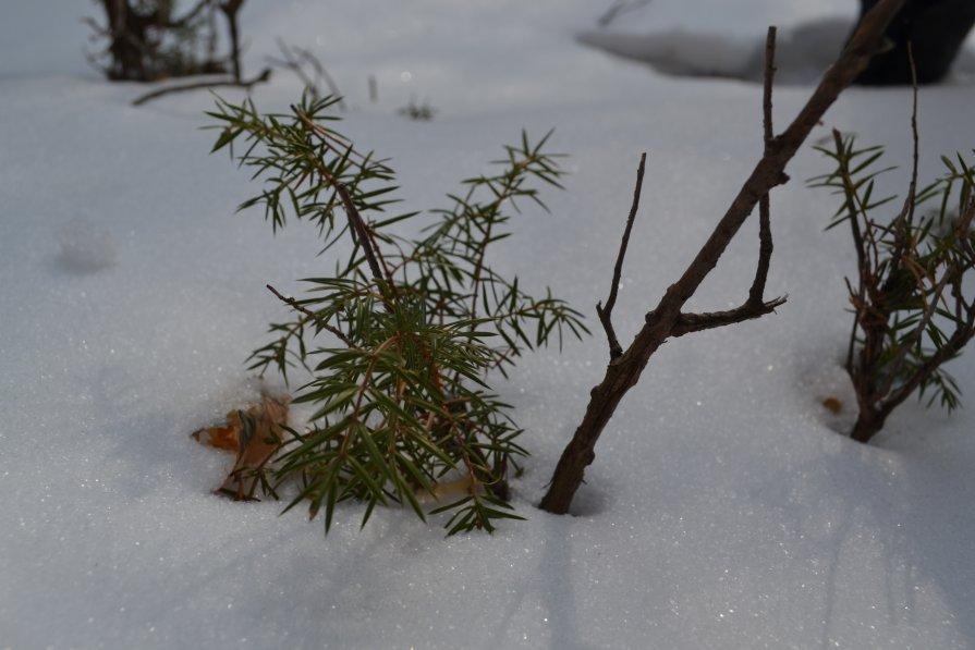 зеленые листочки сквозь снег - Виктория Котлярчук