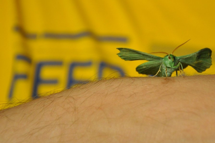 Барселонская бабочка - Юлия Годовникова