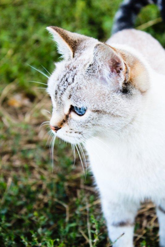 Кошка - Александра Молодовская