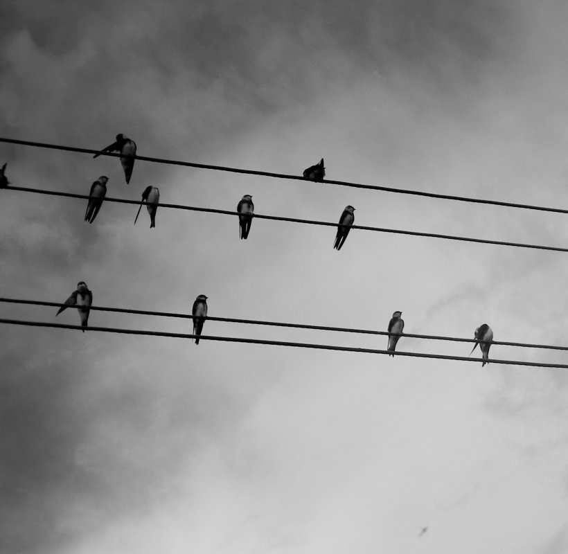 Птичьи ноты - Алёна Дягелева
