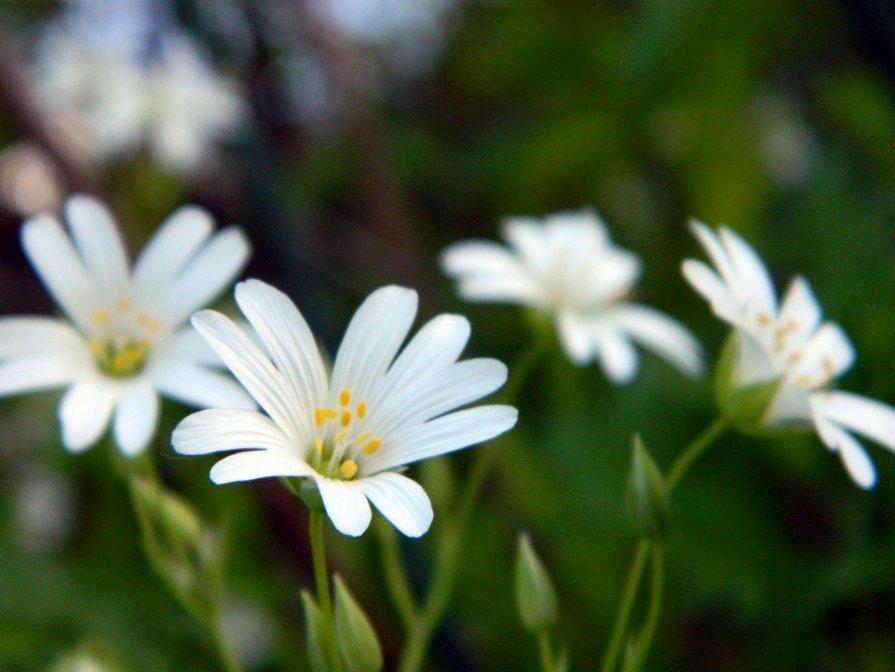 Цветы - Руслан Хайдаров