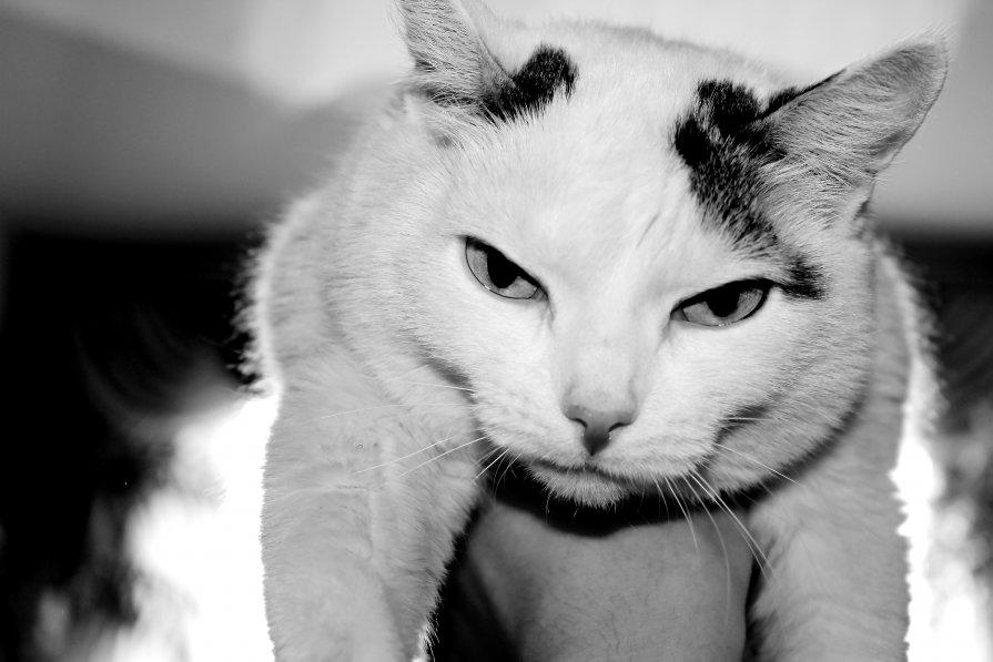 кошка - Павел Мисько