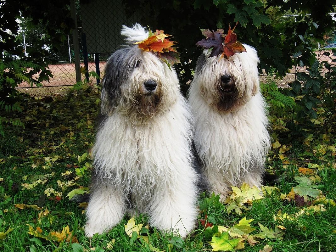 Осенние бобики - Лариса Батурова