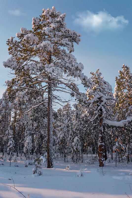 Деревья припушились - alex graf