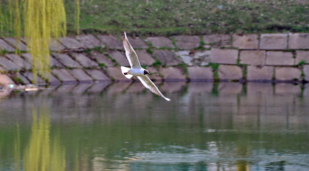 Чайка на озере... - Любовь С.