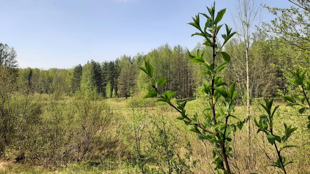 Майским днём в лесопарке - Елена Павлова (Смолова)