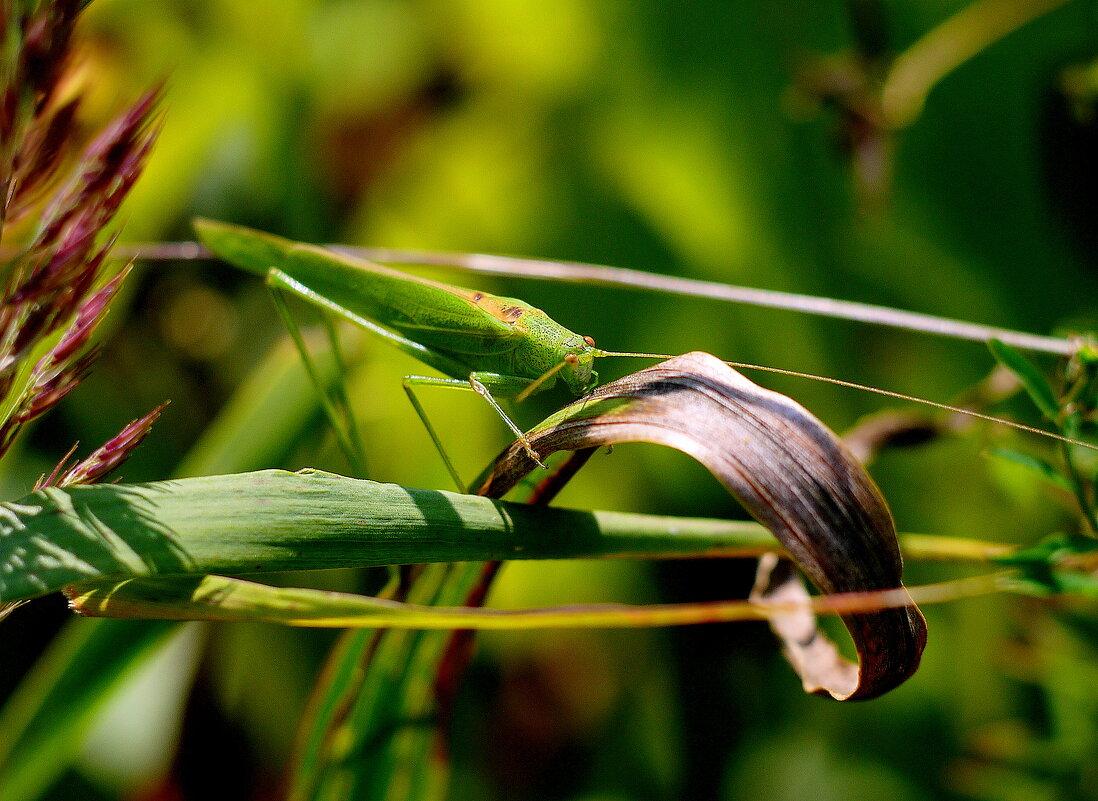 про зелененьких в траве  1 - Александр Прокудин
