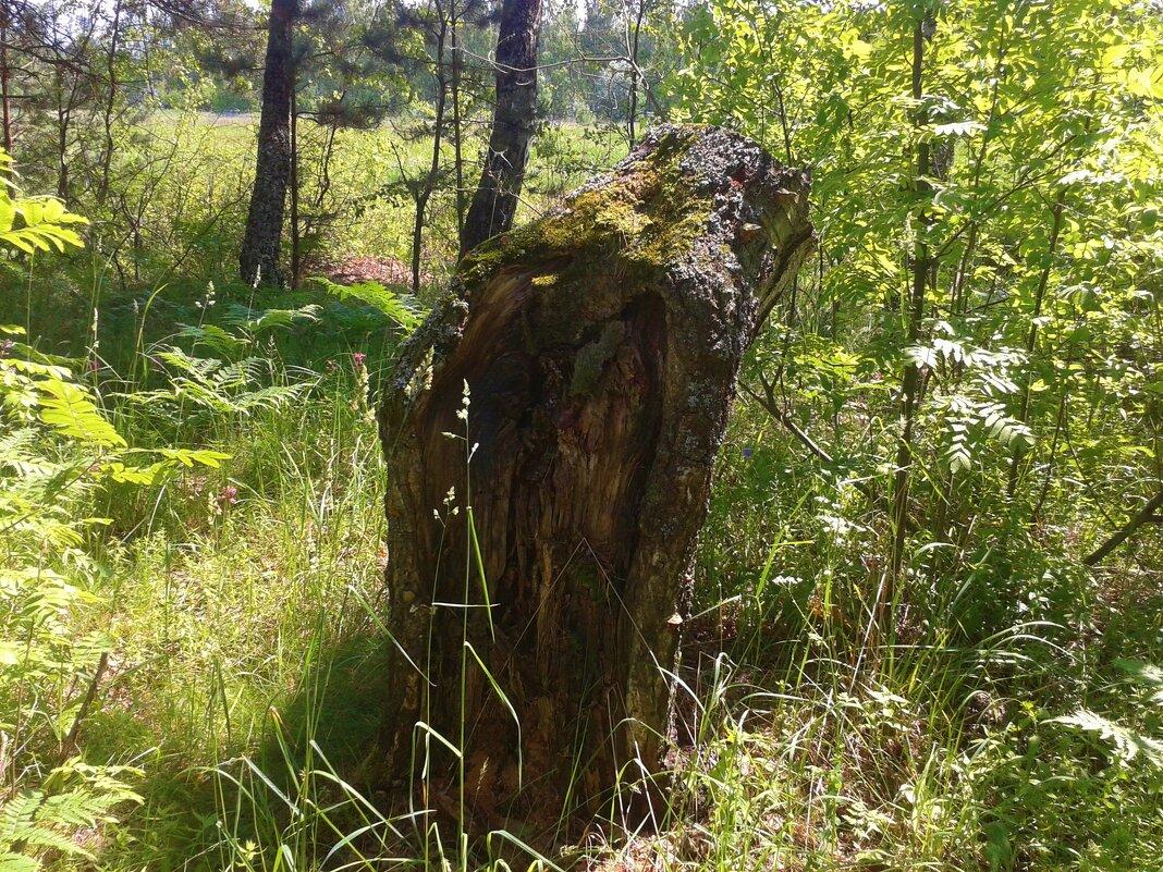 лесной памятник - Владимир