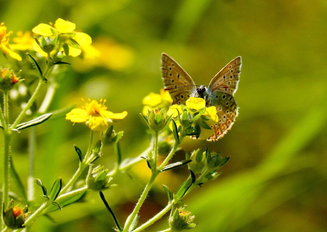 снова о бабочках...73 - Александр Прокудин