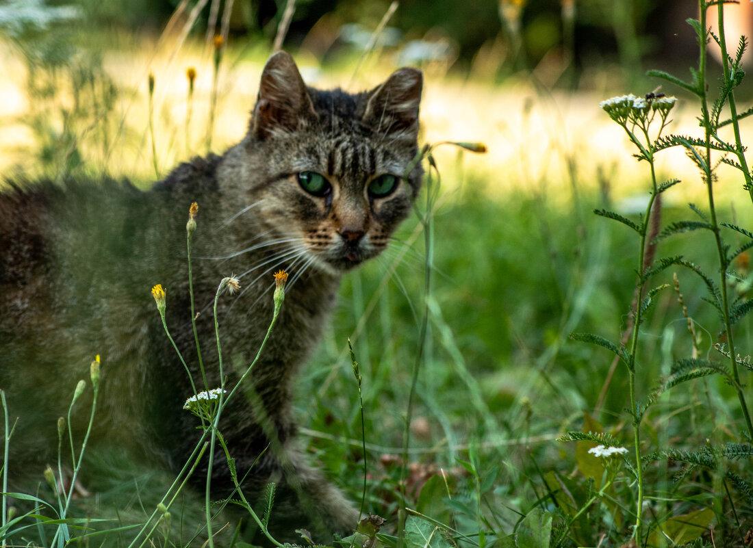Дикий кот - Дмитрий