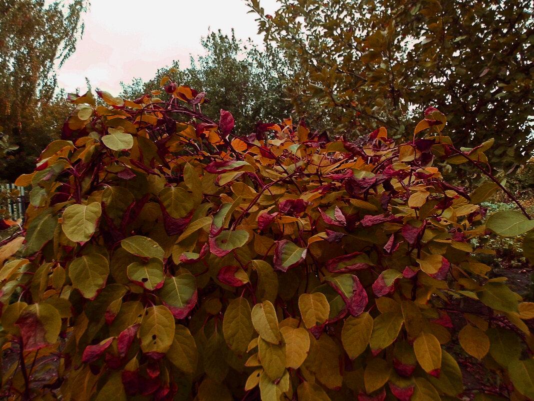 Forever autumn... - Юлия Денискина