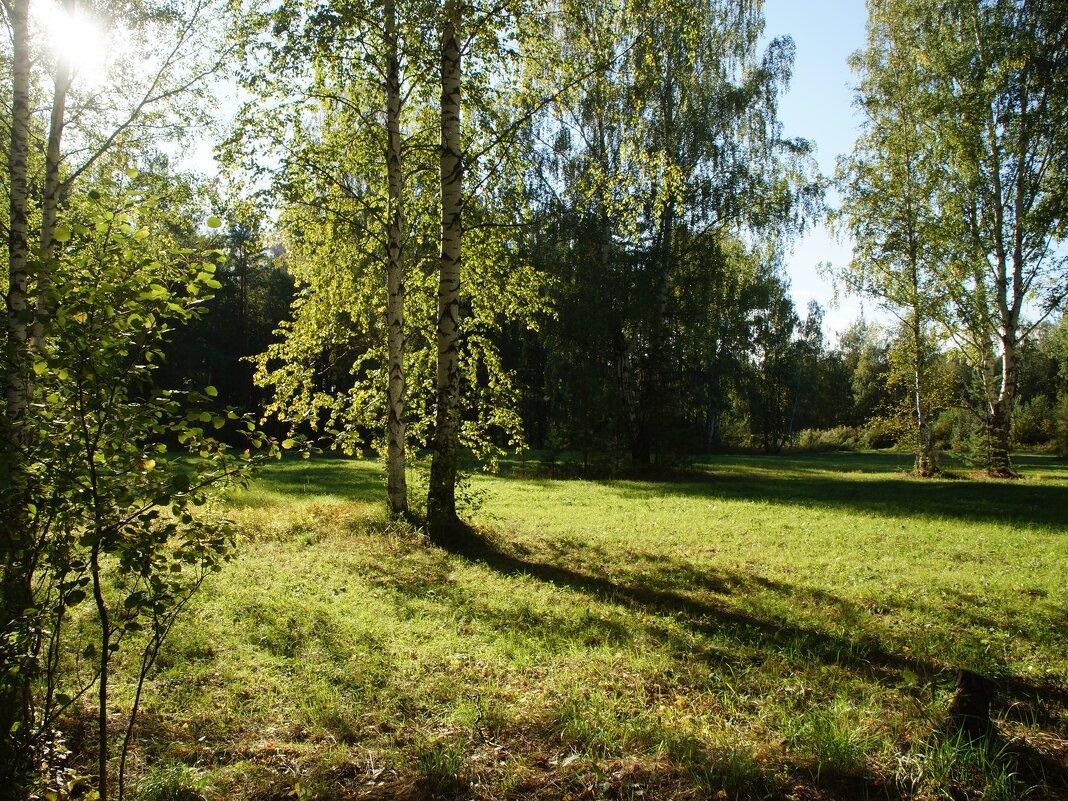 Солнечная поляна - Наталья Т