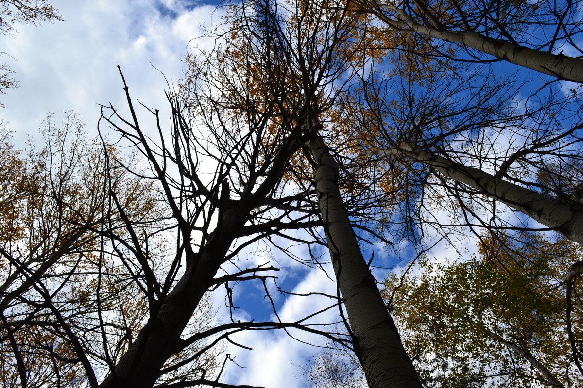 Осенний лес и небеса.... - Георгиевич