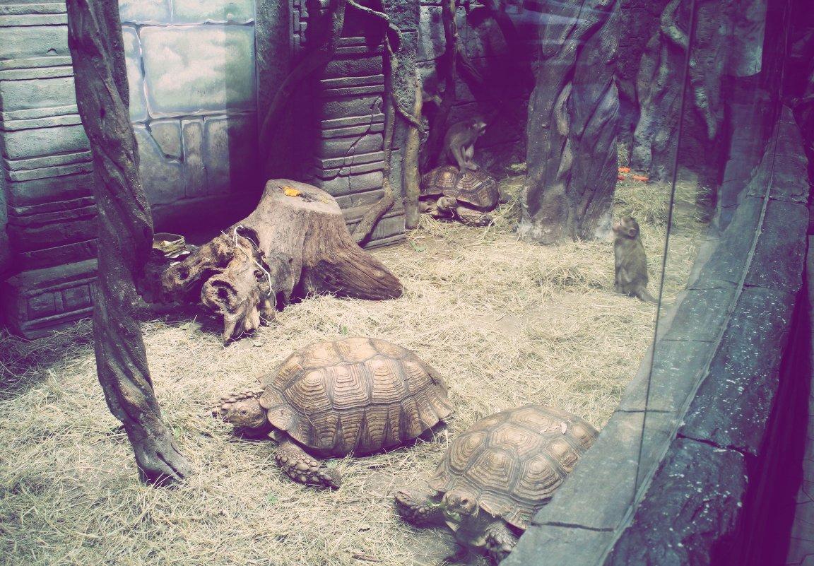 Черепахи катают обезьян - Наталья ***