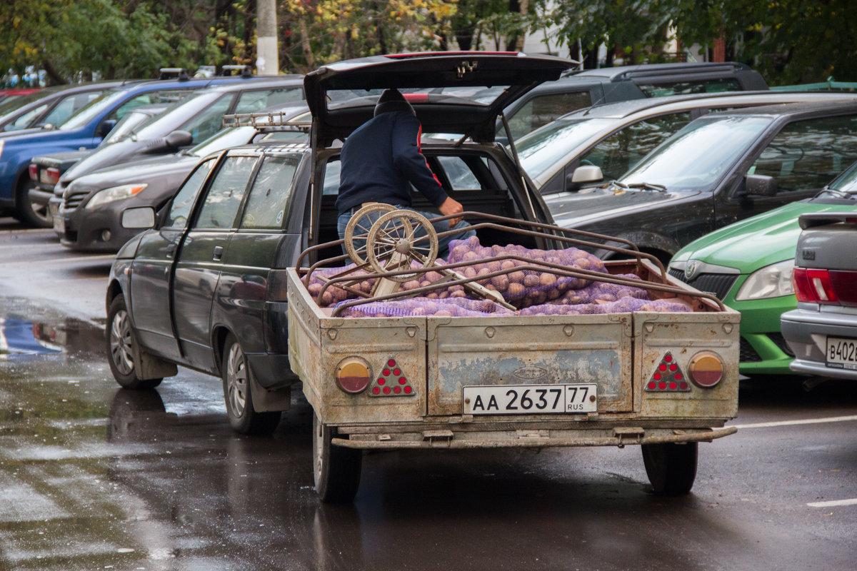 Картошка - Алексей