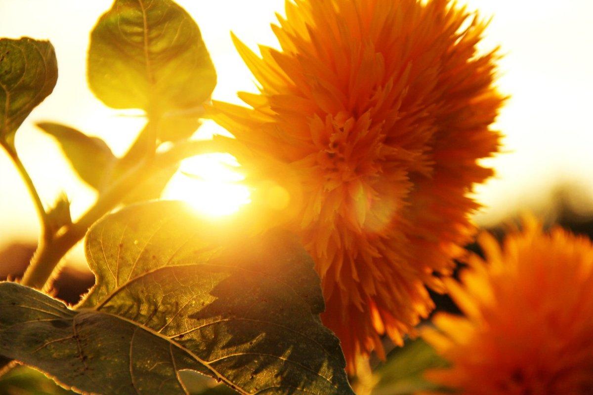 цветок на закате - Антон Светохин