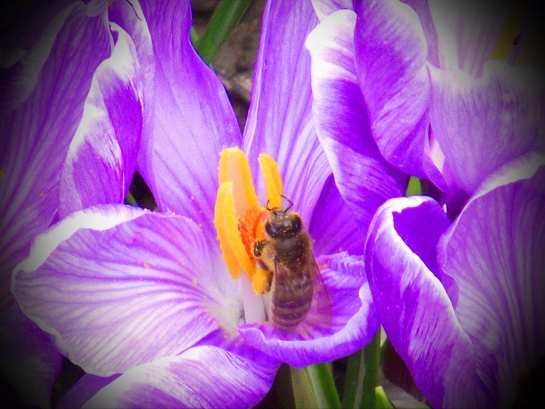 Весна!!! - Юрій Федчак