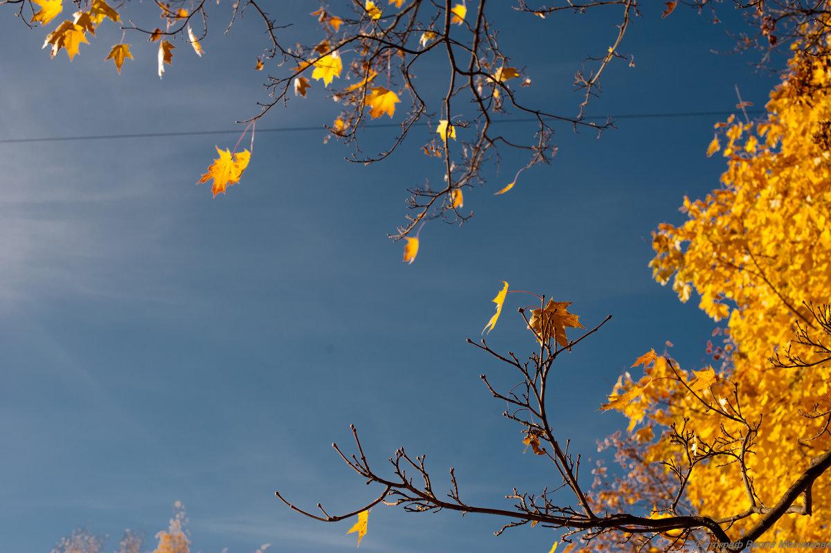 Осень - Виола Мясникова