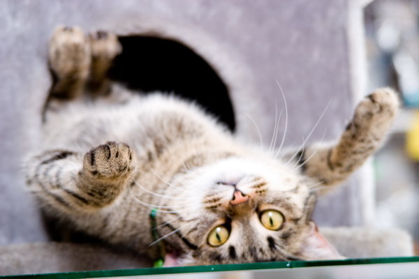 Кошка кверху пузом - YurIG