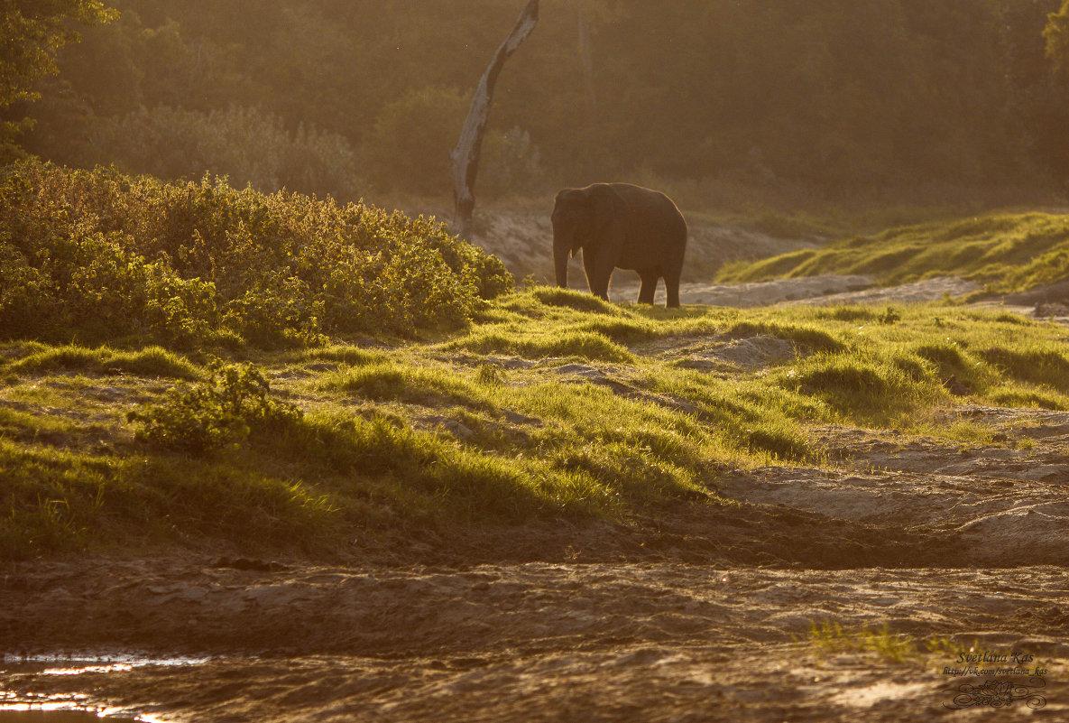 Одинокий слон - Svetlana Kas