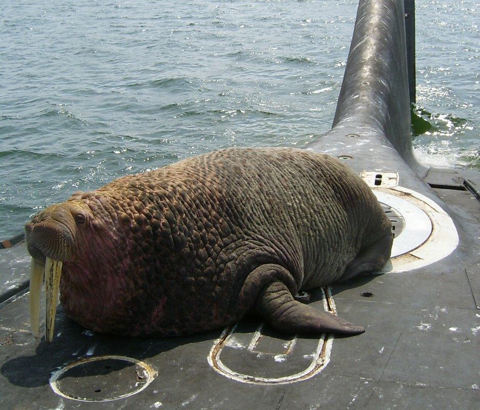 морж на борту подводной лодки