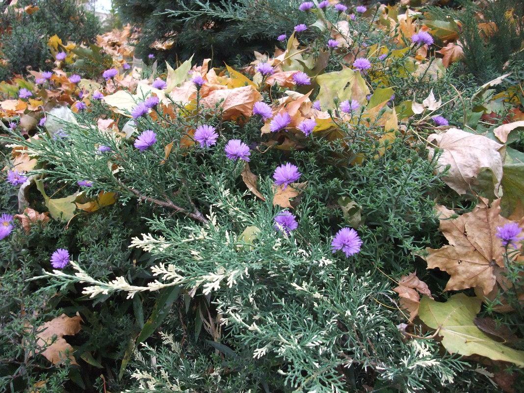 Цветы в можжевельнике в октябре - Елена Лукожева