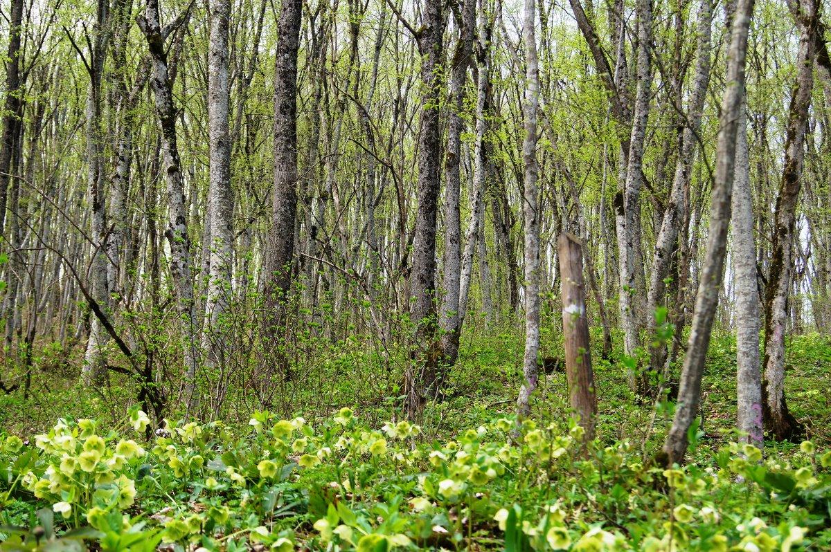 Орно фильм в лесу фото 350-122