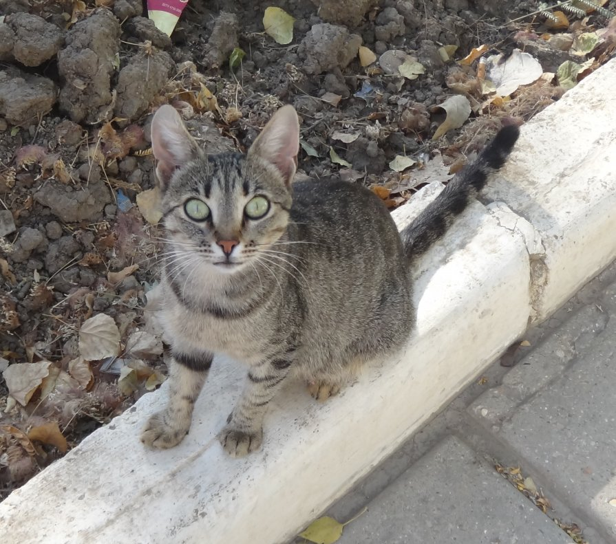 Крымская кошка - Светлана Овчинникова