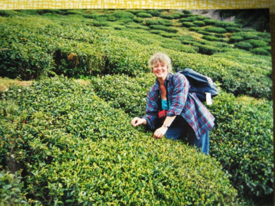 Сбор чая - Ирина Березкина