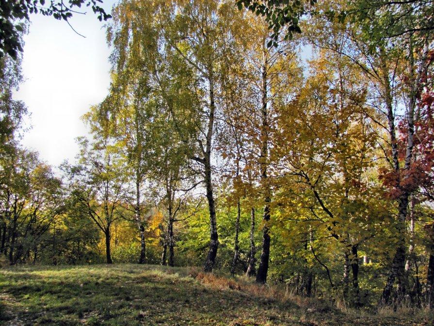 Осень - Игорь Мукалов
