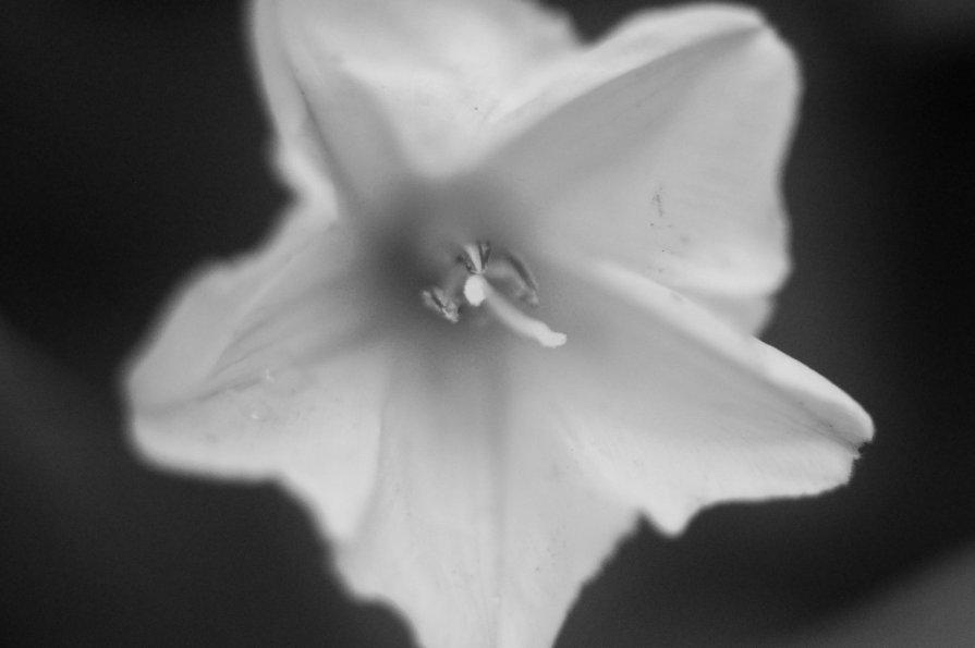 Цветок макро - Михаил Фотолюбитель