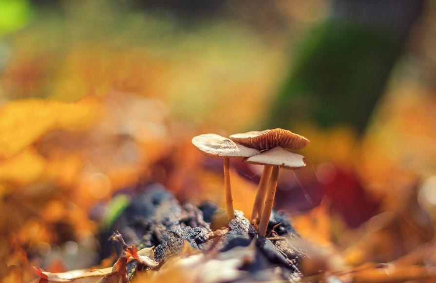 Осенний урожай - Павел Меньшиков