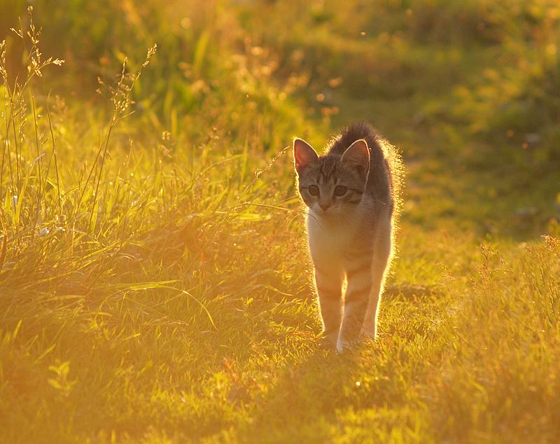 Солнечный котёнок - Максим Судаков