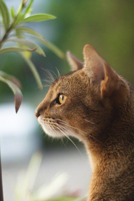 Cat - Maria Zayviy