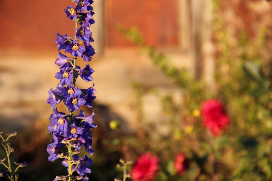 Цветы - Ульяна Сафронова