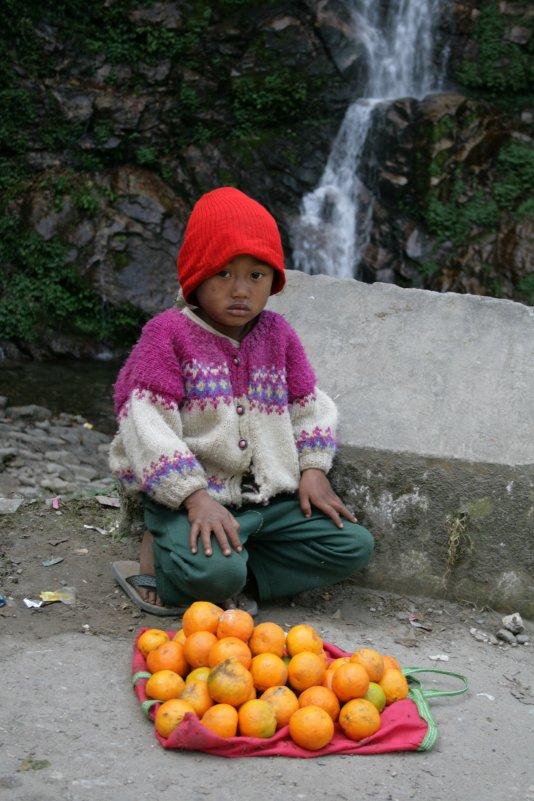 Продавец апельсинов - Александр Другов